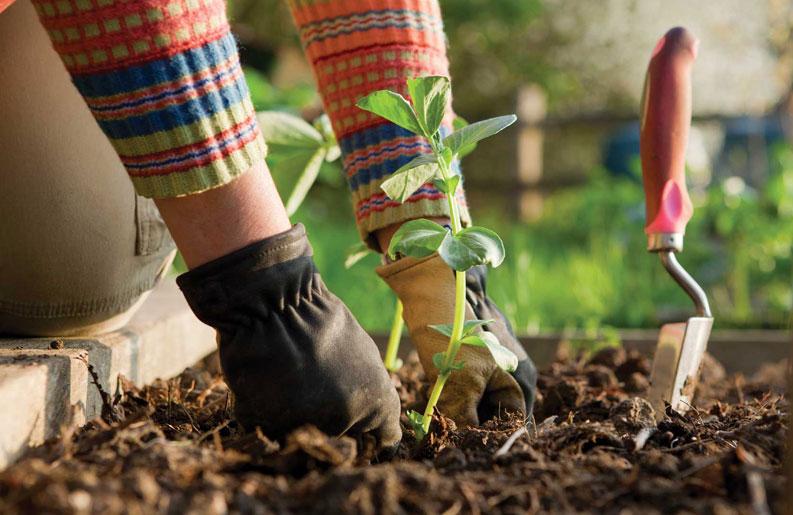 <b>Instagram.</b> Diez cuentas de jardines que tenés que seguir